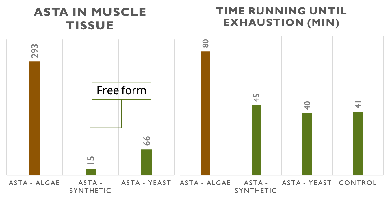 Table that shows the amount of astaxanthin found in muscle tissue shows a remarkable connection with the ability to perform.